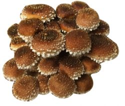 Cinnamon Caps