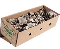 Bulk Organic Mushrooms